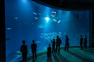 Meeres-Museum und Ozeaneum Stralsund